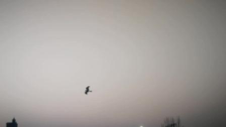 放飞黑鹰鹞子