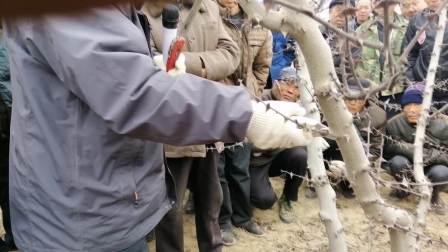 花椒树的整形修剪 秦安县九洲农业职业技术培训学校 主讲 王春芳