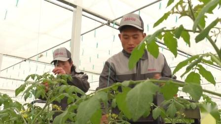 朝鲜咸镜北道镜城郡中坪蔬菜温室农场