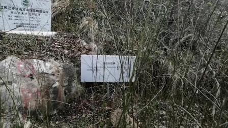 江苏南京汤山方山国家地质公园
