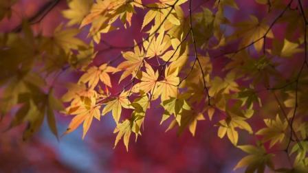 京都·金阁寺龙安寺 I 参悟日本传统文化必须要去的两处寺庙。