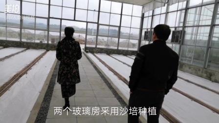 木易家庭农场玻璃房沙培种植
