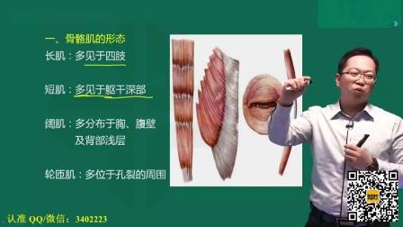 高级康复理疗师视频教程 肌学总论一