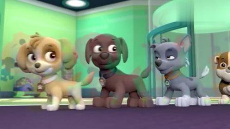 汪汪队:狗狗们看着大屏幕,学习兔子舞,一起扭扭小尾巴
