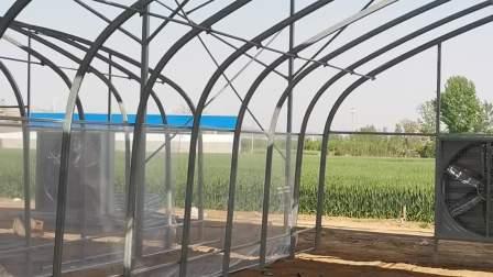(歌珊温室)连栋食用菌温室大棚如何设计施工?