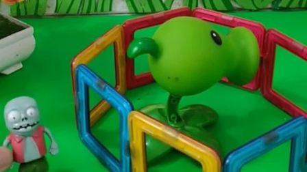 巨人僵尸抓了豌豆射手,僵尸小鬼放走了豌豆射手,豌豆射手挺开心咯!
