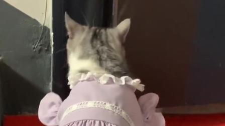 小米带你看小猫咪,泡芙和安生的求婚季。
