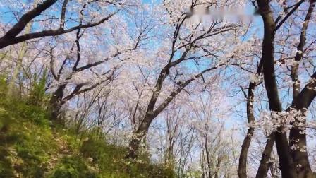 禅修瑜伽冥想疗愈放松专用宁静音乐⊰★⊱车载专用静心音乐之一九九.4-28
