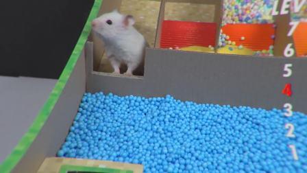 我的世界动画小仓鼠挑战MC迷宫