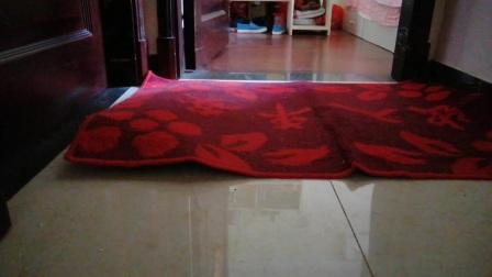 我家的飞毯寂寞难耐啊!