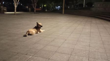 儿子送的小米手机第一次用,滨河公园随拍录(我的剪辑视频_202005212314)