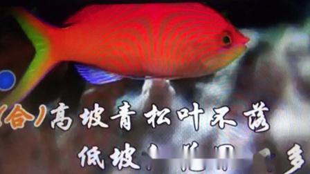 翻唱《徐广仁老师笛子曲(唱得幸福落满坡)》