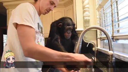 猩猩帮主人做饼干!本以为是个王者,结果就是一堆废铁