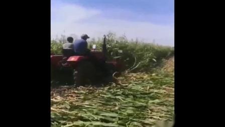 SH-180型玉米秸秆割晒机厂玉米秸秆收割机田间收割高清视频