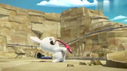 疯狂的兔子:兔子太饿了,要生吃海星