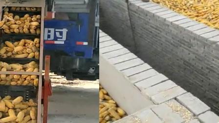 大型新型玉米脱粒机玉米脱粒机器操作