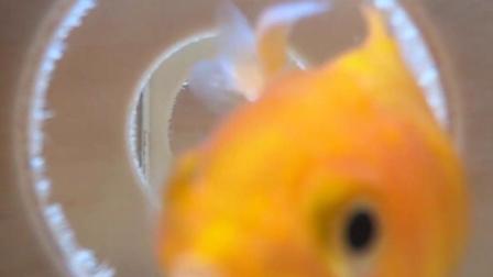 鱼的记忆到底有多久?后悔现在才知道!
