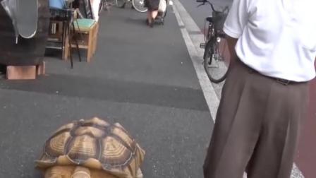 世界上最重的乌龟,性格却相当温顺!