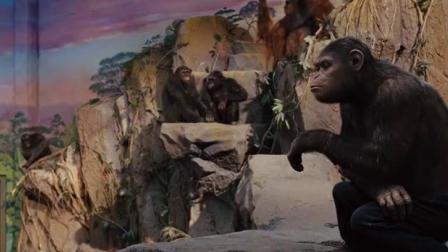 大猩猩给同类们发小饼干,试图让同类们团结起来,太聪明了