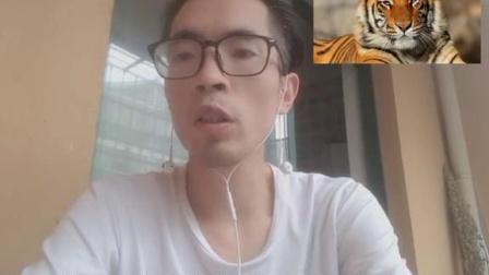 """老虎是中国的,因为老虎头上有个汉字""""王"""",这个讨论在西方突然火了起来#段子 #脱口秀 @抖音短视频"""