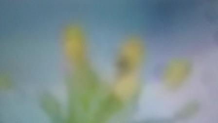 a1西瓜土司 15秒广告 天猫