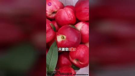【爆款】新鲜油桃,今日9.9元包邮,还不快来!