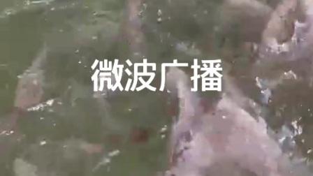 嫦娥卫视微波广播
