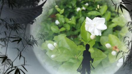 捕捉精彩的瞬间02 自然美景 生活百科 网络红歌 纯音乐 dj歌曲 优美特效音乐视频