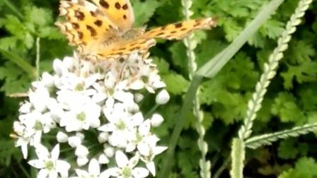 有只蝴蝶飞到了花上面