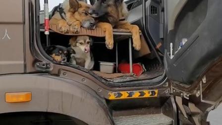 不给你们看一下我养的狗狗,我怕你们惦记我的油箱