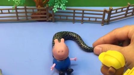 乔治长出小尾巴,小力想帮忙,但还是弄不断!