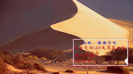 沙漠骆驼背景视频预览