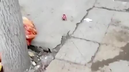 童年趣事:看见玩具就晕倒了