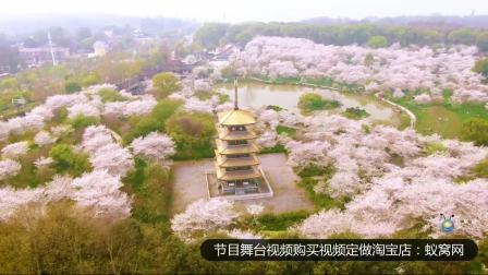 S2227 武汉樱花航拍实拍 高清视频素材