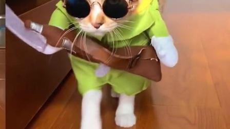 猫咪时装秀,威武霸气