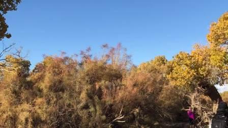 内蒙古阿拉善盟额济纳旗黑水城景区的弱水胡杨林7
