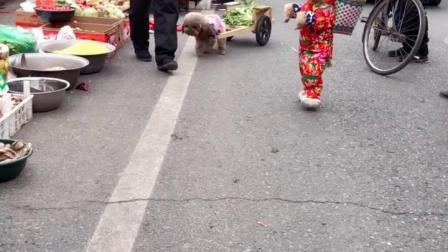 养狗以后,上街买菜再也不用花钱了,就问你们羡不羡慕?
