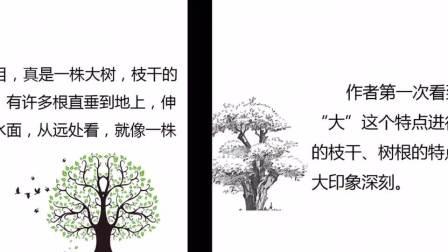 西安市临潼区华清小学五年级语文 《鸟的天堂》陈杜娟