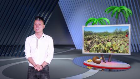 《一起去看海》第013期—海南十大奇葩水果
