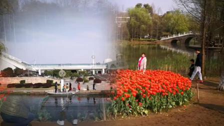高飞艳杭州三月美景