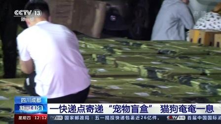 """新闻30分 2021 四川成都:一快递点寄递""""宠物盲盒"""" 猫狗奄奄一息"""