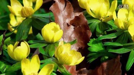 x006大自然冰雪融化 春天春暖花开 小草鸟儿 高清实拍影视视频素材