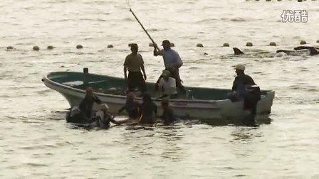 纪录片《海豚湾》预告片