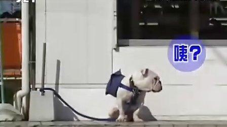 狗狗猩猩大冒险 S1 Ep.02