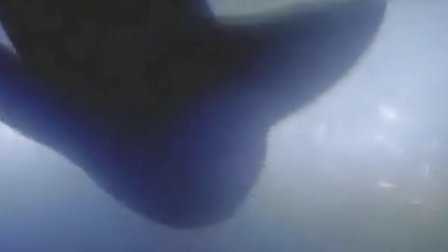大堡礁惊魂 惨!几名背包客惨遭食人鲨活撕!