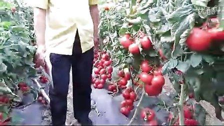 寿光蔬菜增辉实验基地