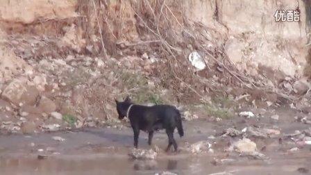 【拍客】狗狗被喜鹊追赶落荒而逃