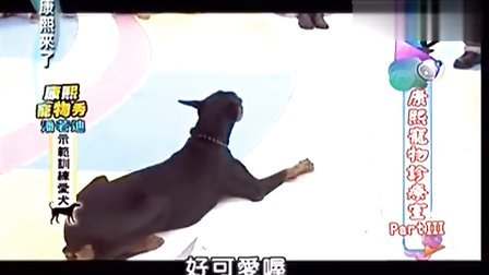 康熙来了-20121129康熙宠物诊疗室PartIII