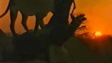 【冯导】霸气雄狮打趴一群鬣狗