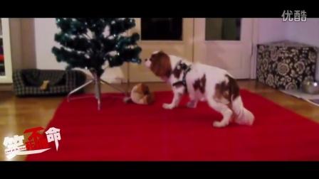 笑死不偿命:萌萌哒  狗狗也要过圣诞